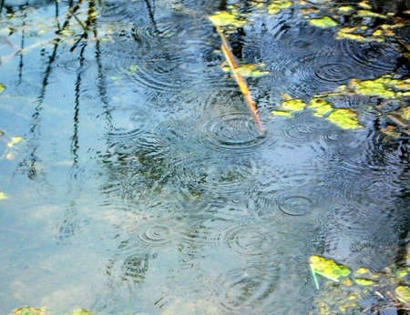 Lake, ripple on the water, pond, rain, dripped, reflection, duckweed, background, texture, type, nature, landscape, dejection, autumn, tin plate foliage, sheet, beauty, reflection