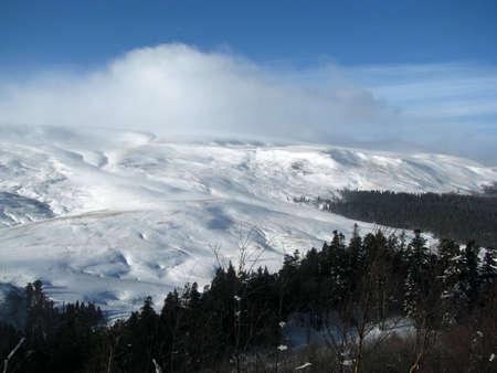 alpine meadow photo