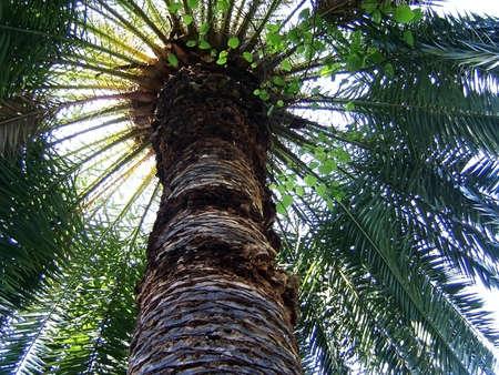 Palm, verdure, krona, stem, tree, sheet, background, texture, sky, vegetation, flora, exotic plant, type, tropics Stock Photo