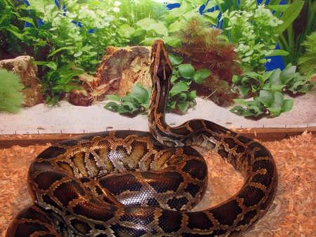 boa: Snake, reptile, zoo, animal, boa, snake skin, scales, type, fauna
