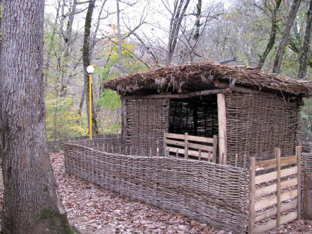 Shelter for cattle; a wattled fence