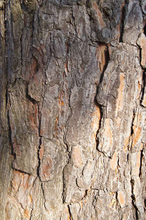 Background. The bark of old tree