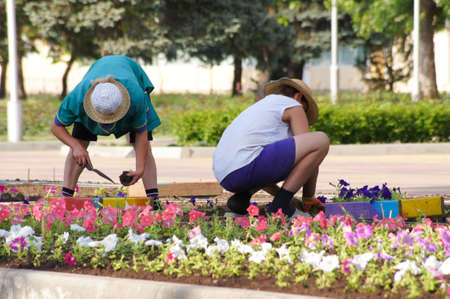 Workers put flowers on a city bed Stock Photo
