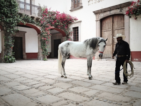 rancher: A rancher and his white horse