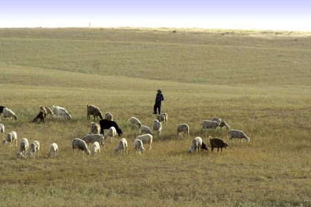 Young shepherd with own herd in the spring field Stock Photo