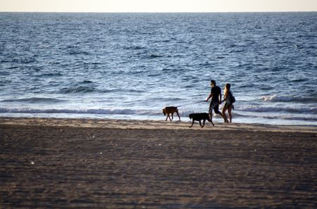 A walk along the sea with dogs Stock Photo - 3737868