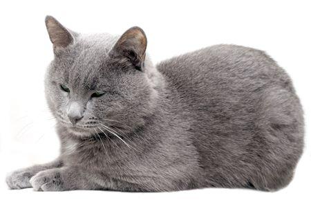 My lovely cat on white background photo