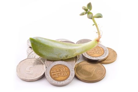 sheqel: Sprout of succulent over a coins isolated on white background