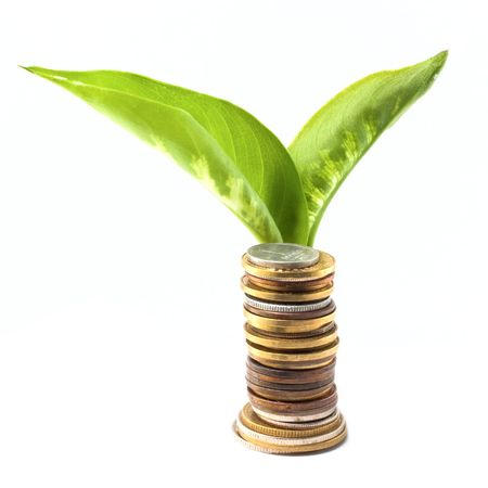 Young plant over a coins isolated on white background photo