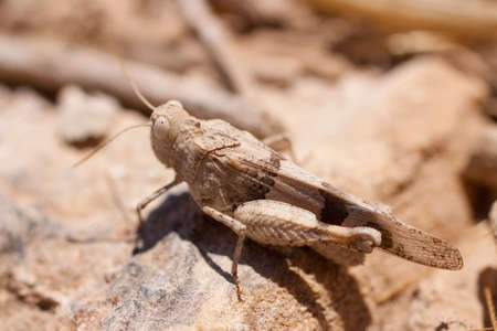 large grasshopper photographed in close-up photo