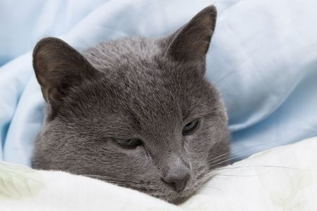 meow: My lovely cat lying under cover Stock Photo