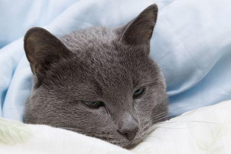 My lovely cat lying under cover Imagens