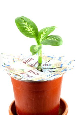 sheqel: Young plant over banknotes isolated on white background
