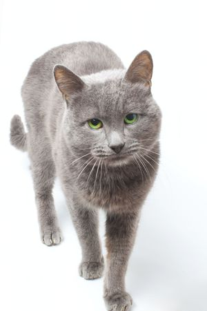 My lovely cat on white background Stock Photo - 6329846