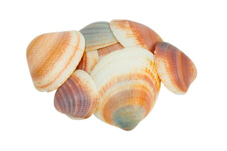 Shellfishes isolated on white background Stock Photo - 8269748