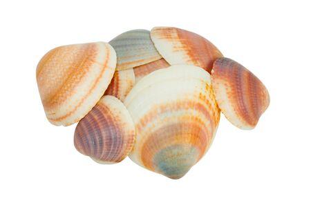 Shellfishes isolated on white background Stock Photo - 8269748