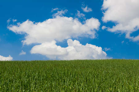 Fresh green grass with a blue sky and clouds Stock Photo