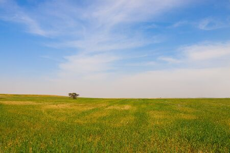 Lonely tree on a meadow of green grass Stock Photo - 9152527