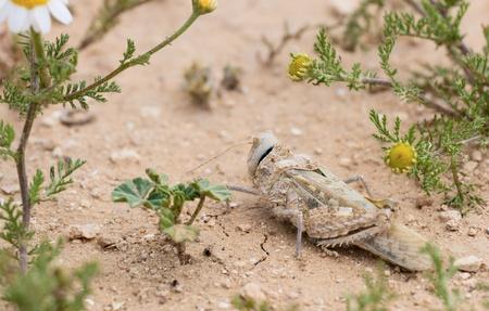 Grasshopper sitting in the desert photo