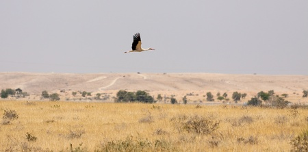 Stork flying in the sky Stock Photo - 10337697