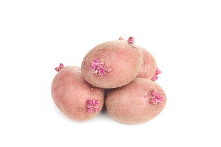 Potato isolated on white background photo