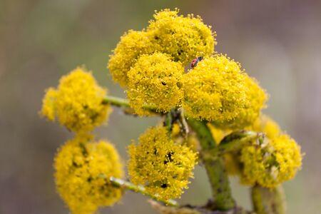 yelow: Bright yelow flower in a spring garden