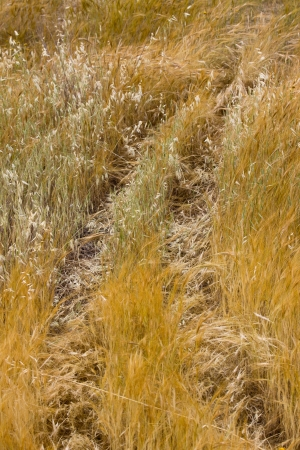 Trace of truck in a dry grass photo