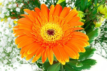 Orange flower in bouquet isolated on white background Stock Photo - 16443404