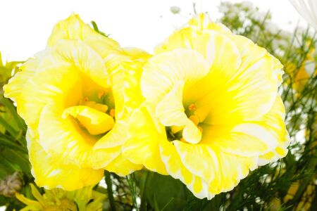 Pair of yellow flowers in bouquet isolated on white background Stock Photo - 17595941