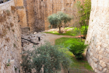 Ancient moat with plants near a tower of david, at the old city walls of Jerusalem photo
