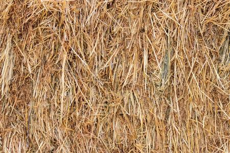 Dry hay background photo