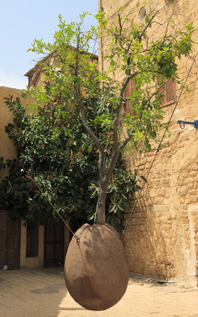 Famous tree without root in Jaffo city, Israel photo
