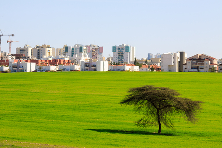 Green field with lonely tree front of Beer Sheva, Israel