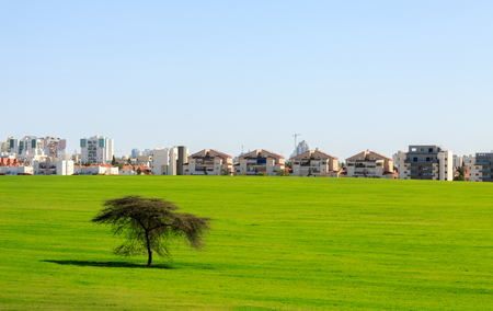 Beer Sheva suburb behind a green field and tree under sky, Israel Imagens