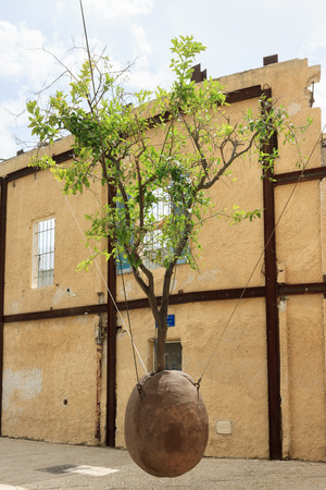 Famous tree without root in Jaffa, Israel photo