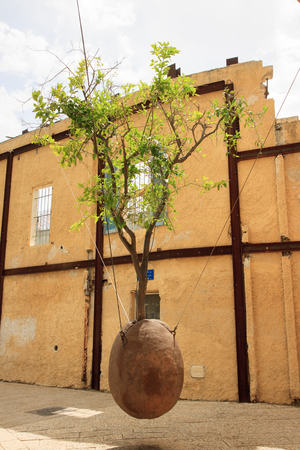 Tree without root in Jaffa, Israel photo