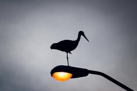 Silhouette of a stork who sleeps on the lantern photo