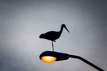 Silhouette of a stork who sleeps on the lantern photo