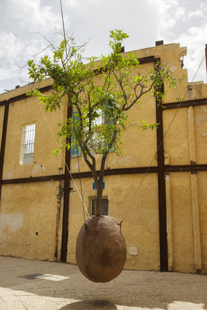 Live tree without root in Jaffa, Israel photo