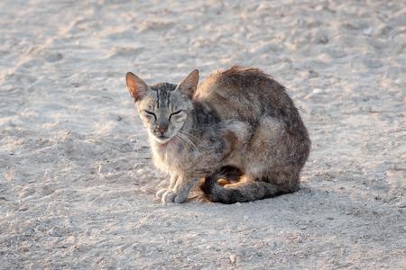 undomestic: Undomestic cat sleeping on sunlight