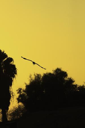 Silhouette of stork who flying on golden sunrise photo
