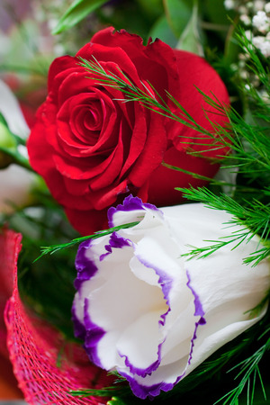fringes: White rose with blue fringes and red rose in bouquet