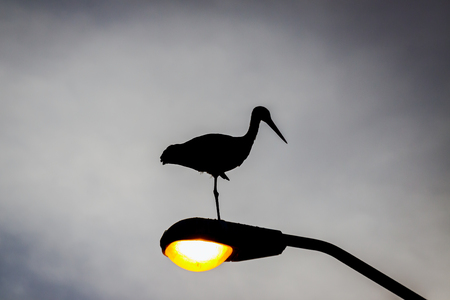 Dark silhouette of a stork who sleeps on the lantern photo