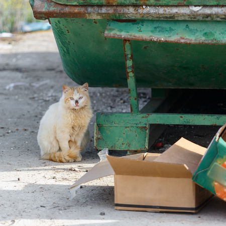 wretched: Dirty fluffy homeless cat sit near garbage cans