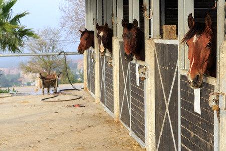 hobby hut: Four brown horses stand in a stable Stock Photo