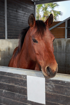 hobby hut: Portrait of beautiful horse who is stand in a stable Stock Photo