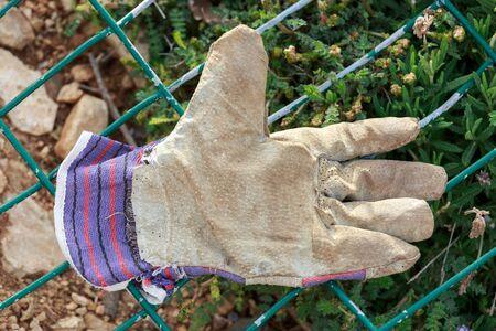 work glove: Old work glove is lost on the green lattice Stock Photo