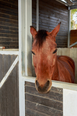 hobby hut: Portrait of one beautiful horse who is stand in a stable
