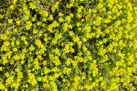 Bush with many small yellow flowers on background stock photo bush with many small yellow flowers on background stock photo picture and royalty free image image 39090575 mightylinksfo