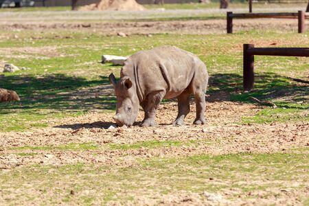 resilient: Child of rhinoceros on the ground